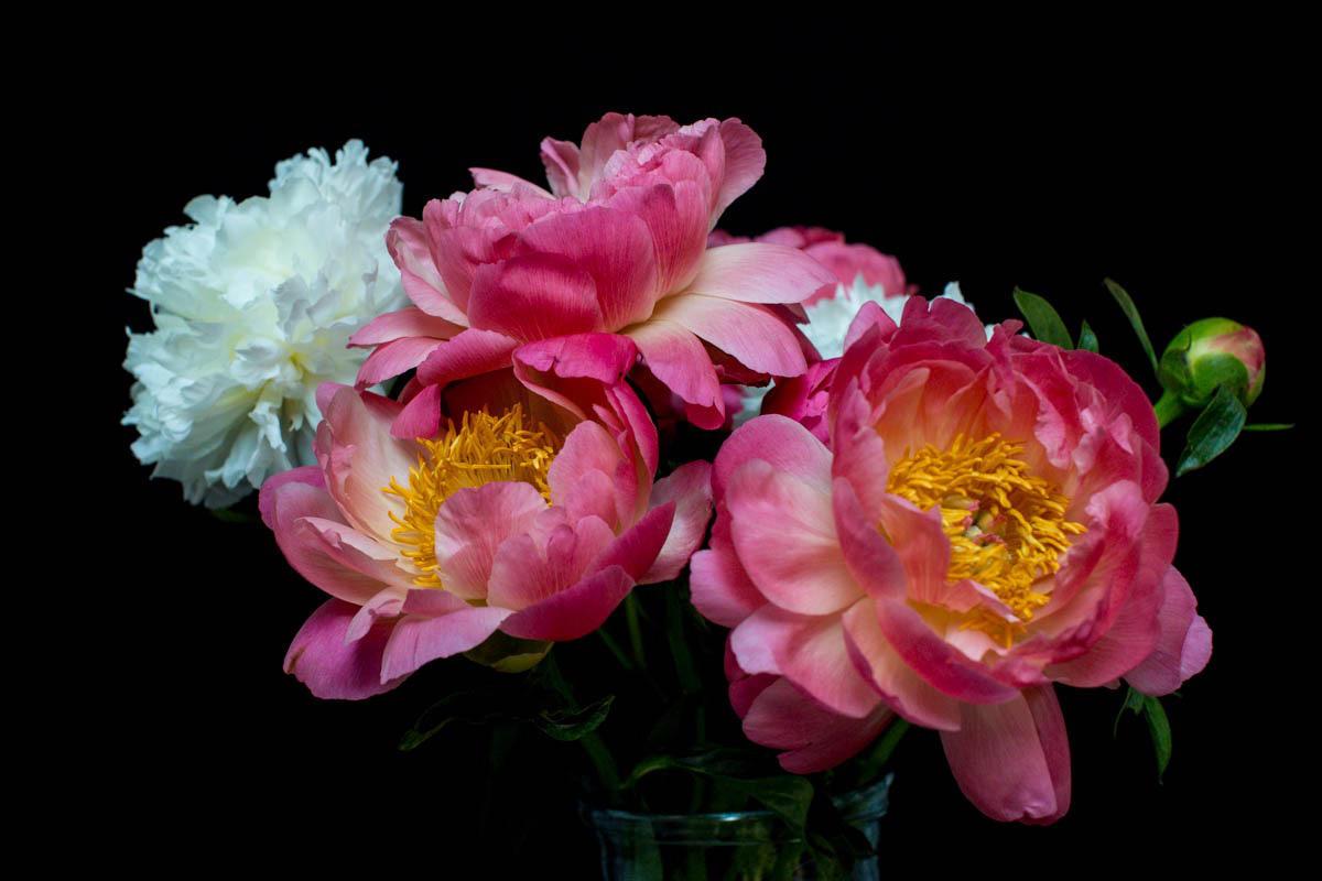Myrtle & Smith pink peony