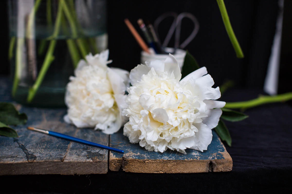 Myrtle and smith white peonies