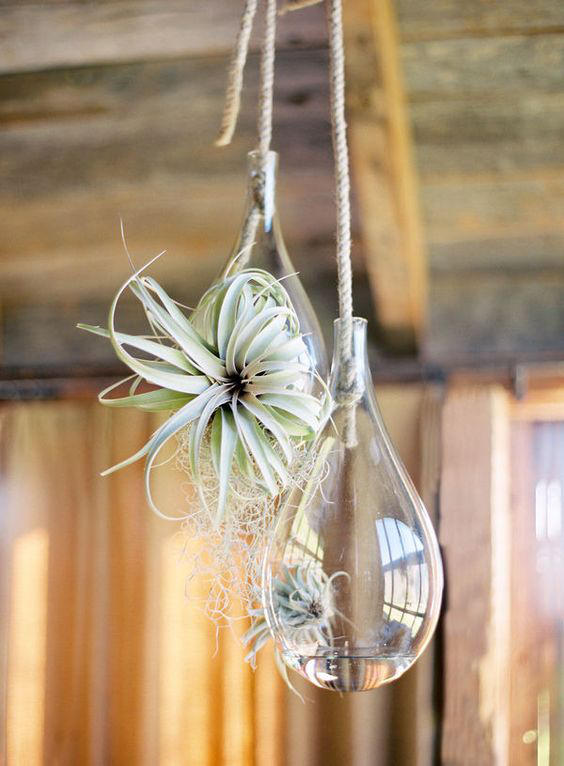 Greenhouse wedding air plants