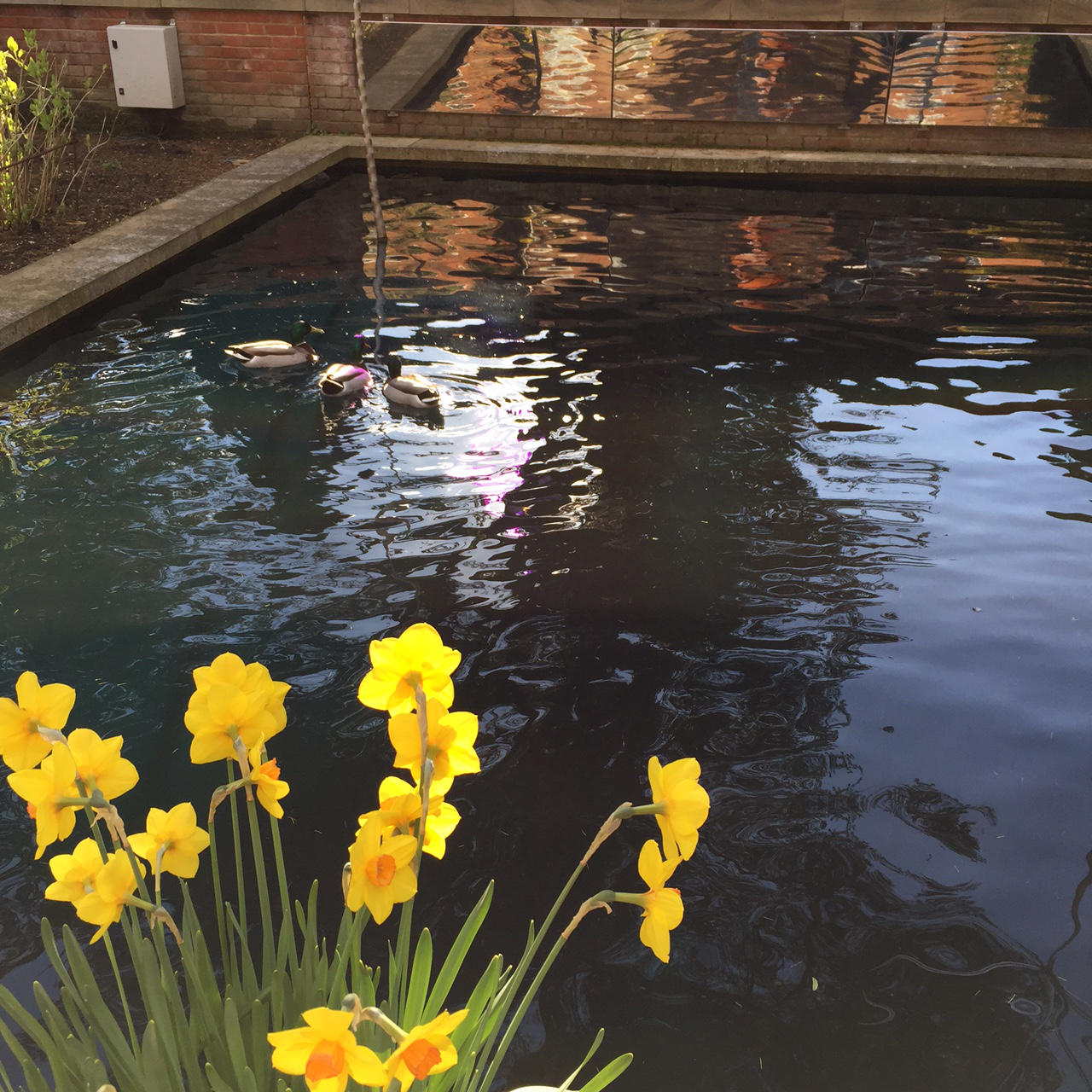 The Grove Hotel Water Gardens